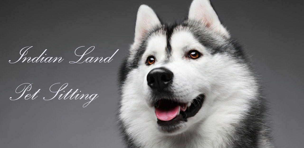 Indian Land Pet Sitting