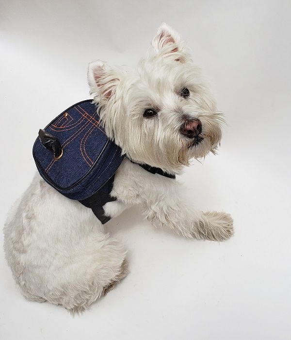 Denim Doggy Backpack from A Pet With Paws