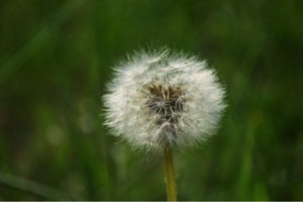 Take early precautions to keep weeds from competing with grass for resources.