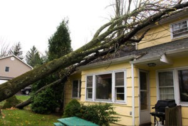 Follow these storm season safety tips to keep your trees and your property safe.