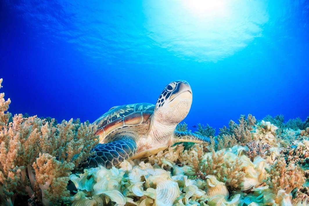 Club Paradise Palawan Environmental Sustainability
