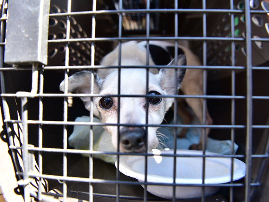 Emergency Animal Aid