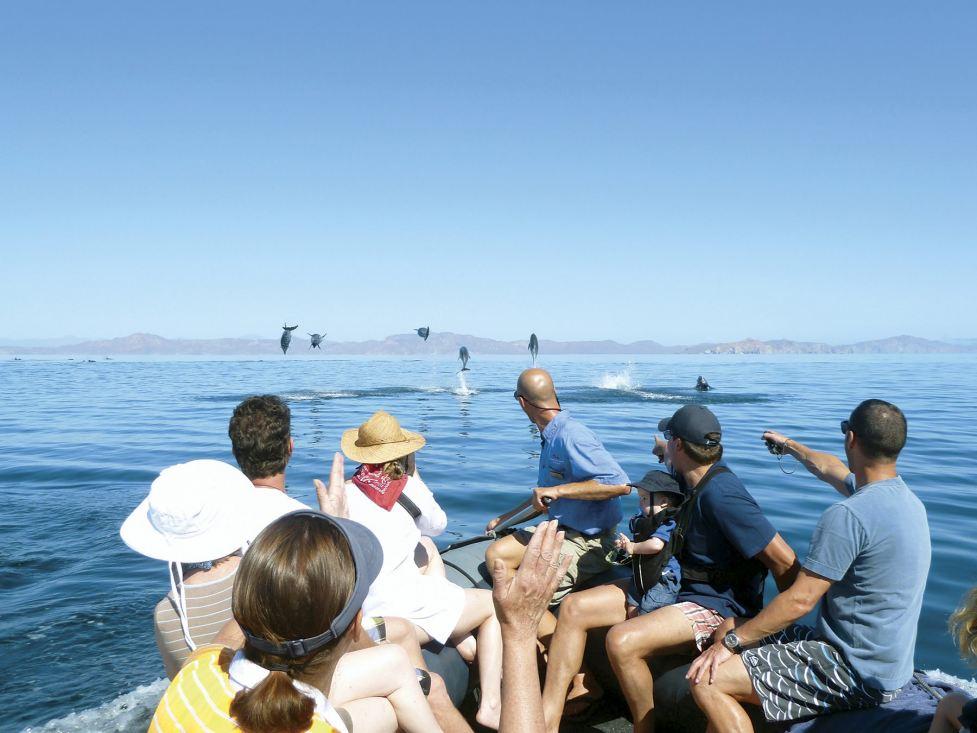 SeaOfCortez dolphins_
