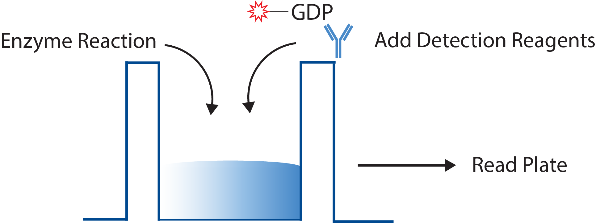 GDP-Assay-Schematic