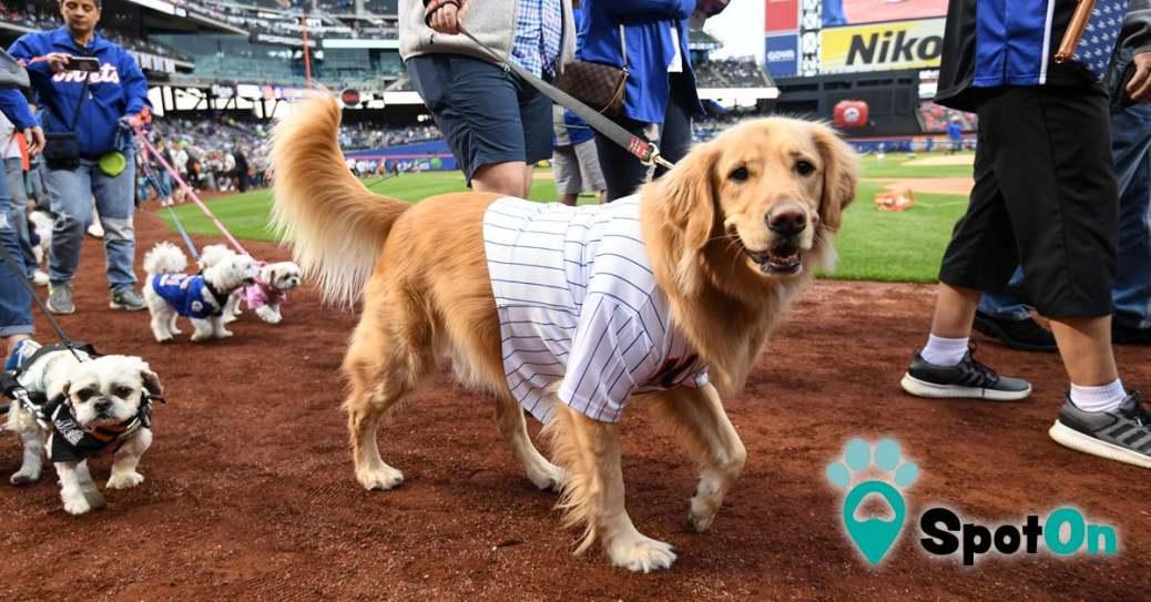 Spoton.Pet at Mets Bark at the Park