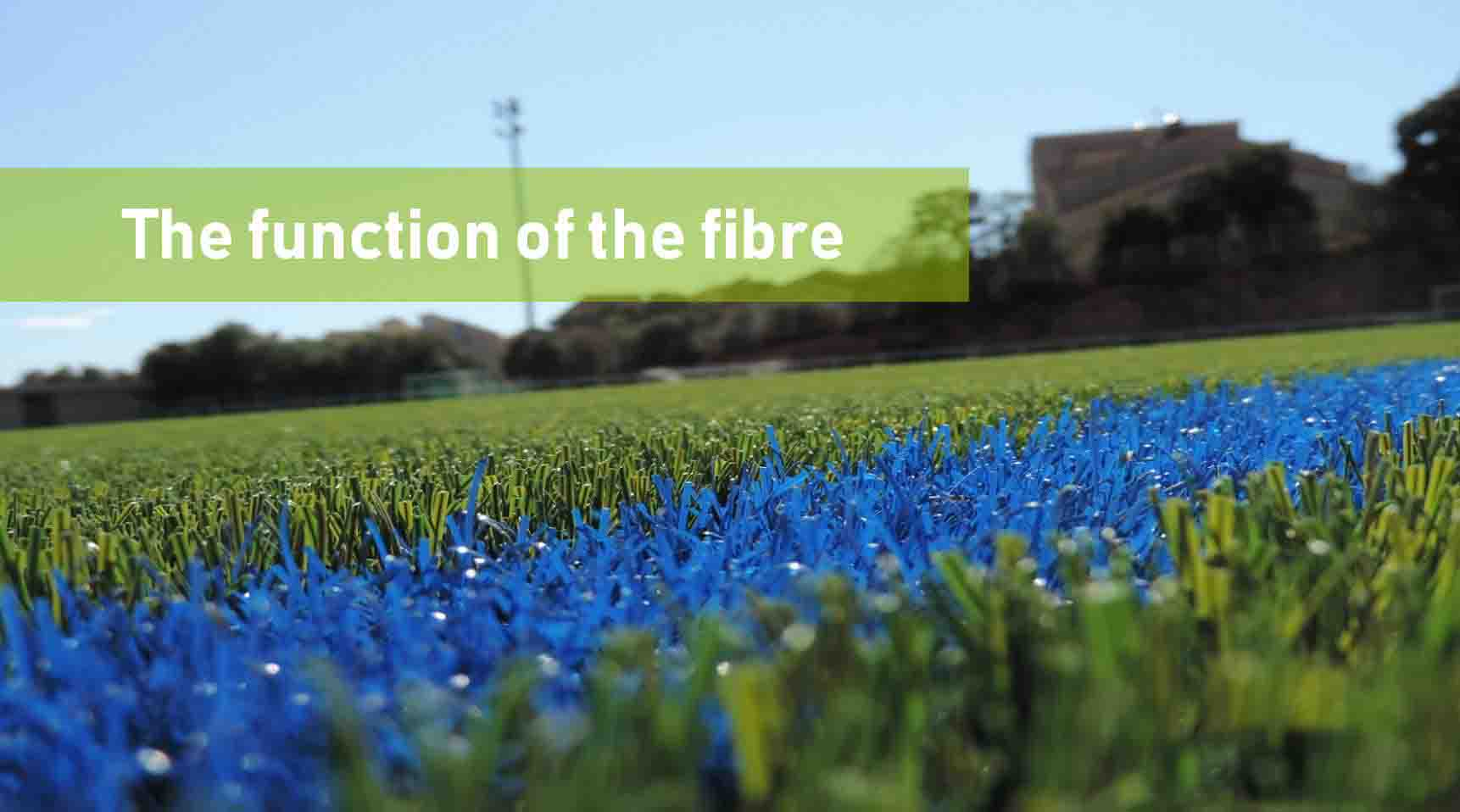 The Function of The Fibre