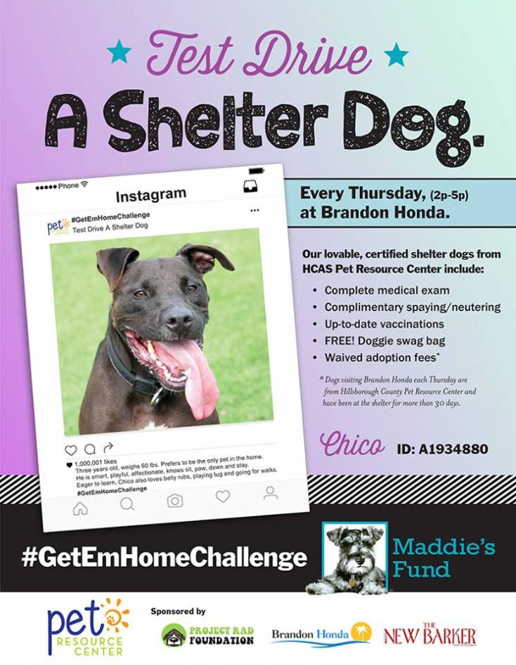 Come meet Chico on Thursday!
