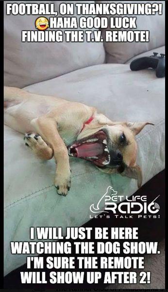 2017 Dogs Until 2 Meme Contest Winner