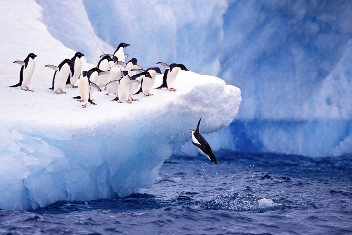 Antarctic penguins on iceberg