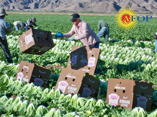 Thank you, farmworkers!