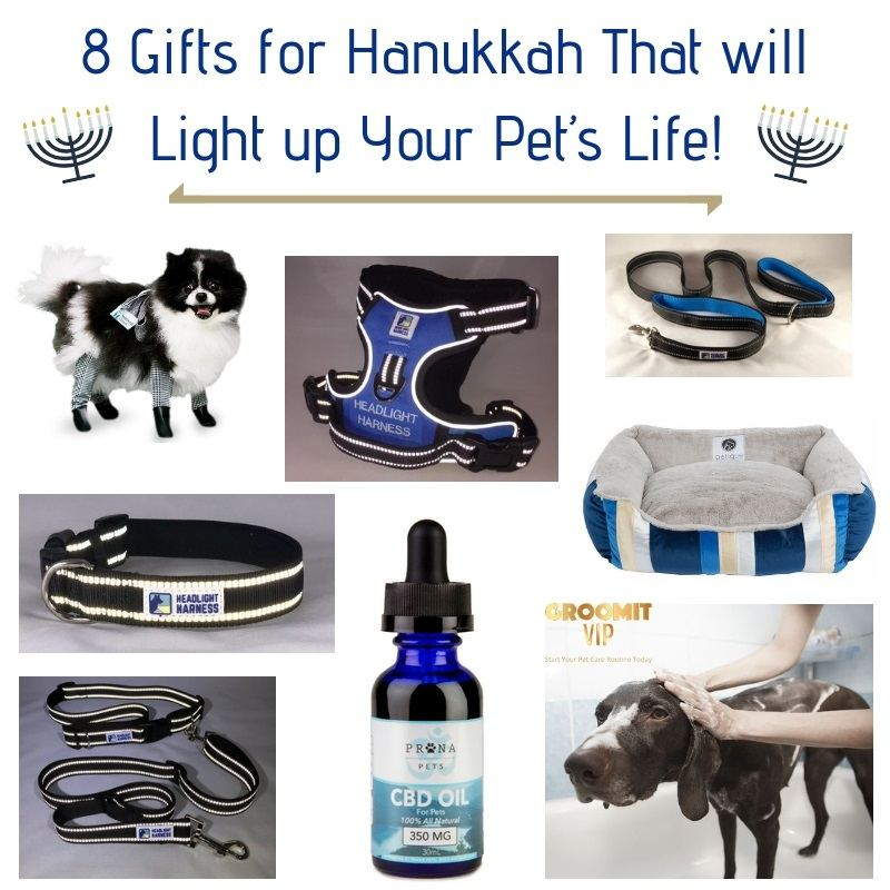 8 Gifts for Hanukkah That will Light up Your Pet