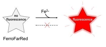 Reaction Mechanism of FerroFarRed