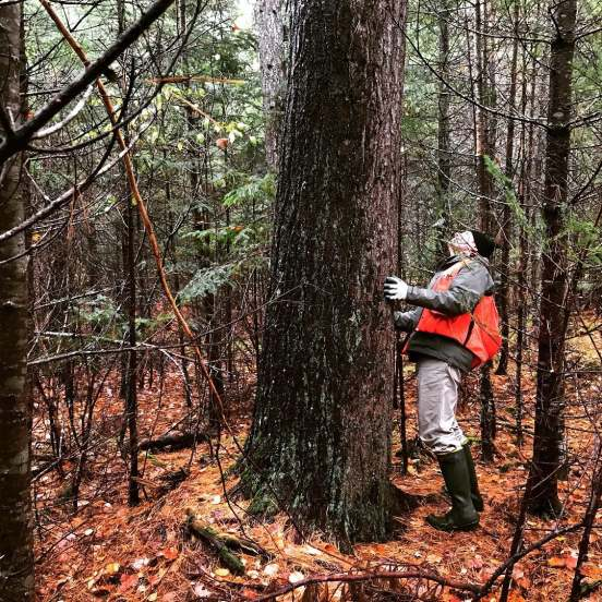 Maine Forest Service officer conducting a preliminary land assessment.