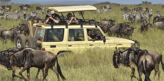 jeep safaris 36