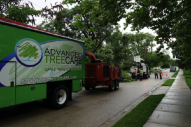 Municipalities choose nighttime tree care to prevent major traffic nightmares.