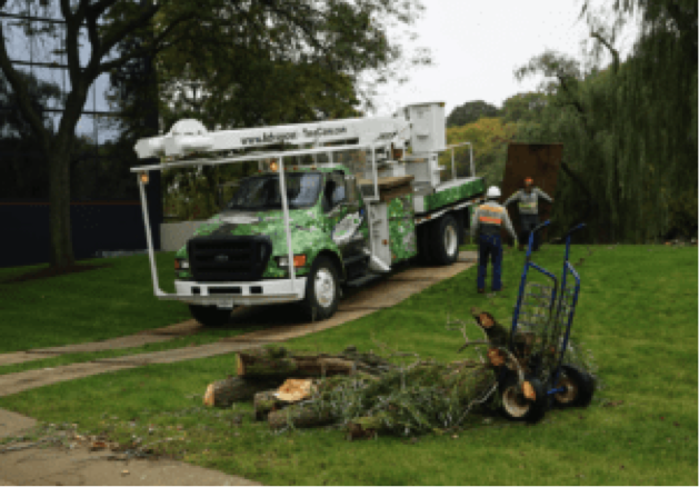 Regular tree pruning produces strong, healthy, and attractive trees
