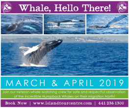 Whale Watching Tour in Bermuda