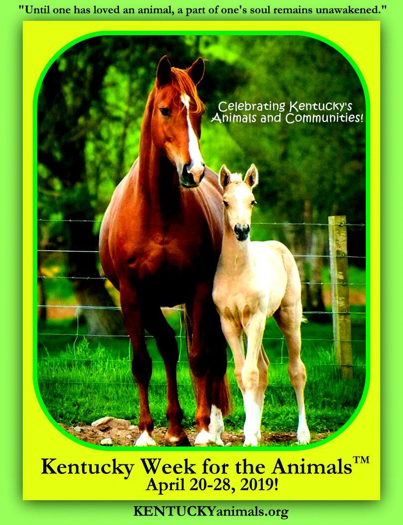 hopey-horses