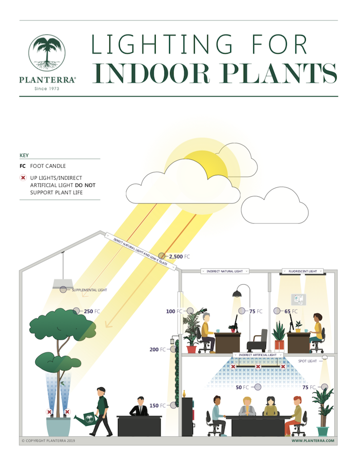 New research on lighting indoor plants is available at Planterra.com/Light.