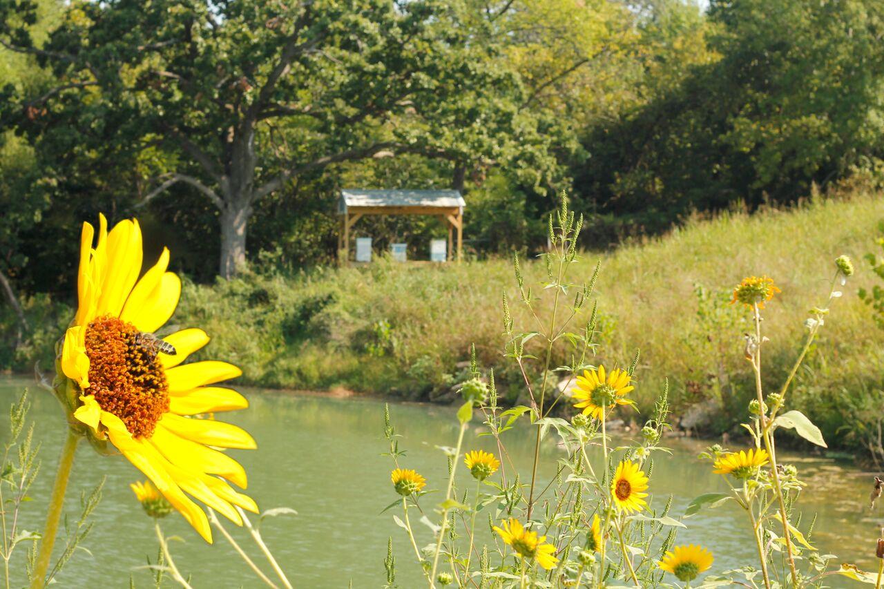 Landfill Honey Bees - Tulsa, Oklahoma