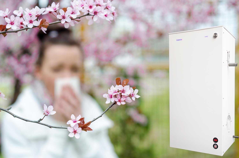spring allergy