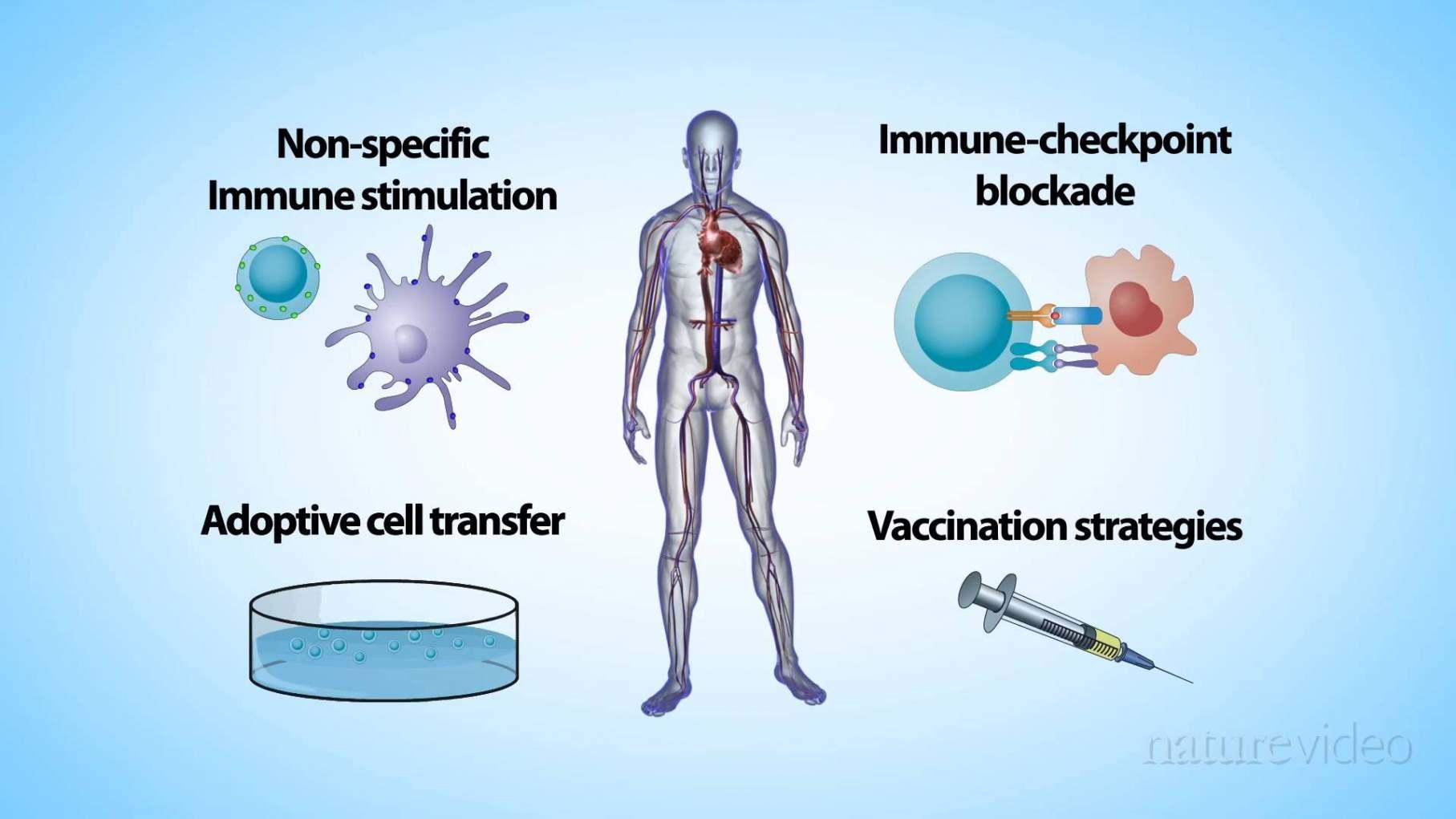 Immunotherapy Drugs Market fg