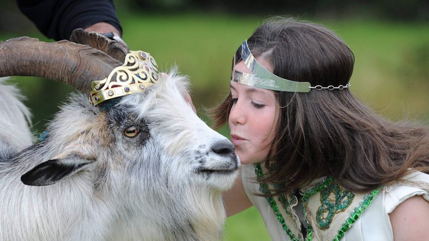 A kiss for the goat king at Puck Fair