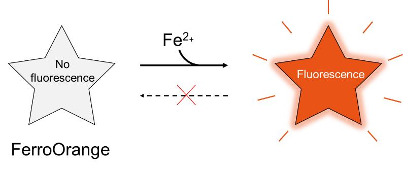 Reaction Mechanism of FerroOrange