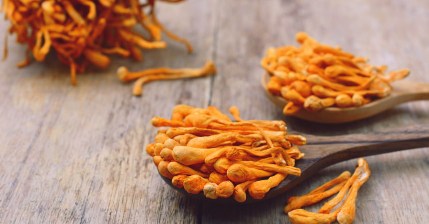 Cordyceps Sinensis and Militaris Extract Market