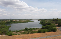The agricultural Areas on River Bénoué banks downstream of Lagdo Dam