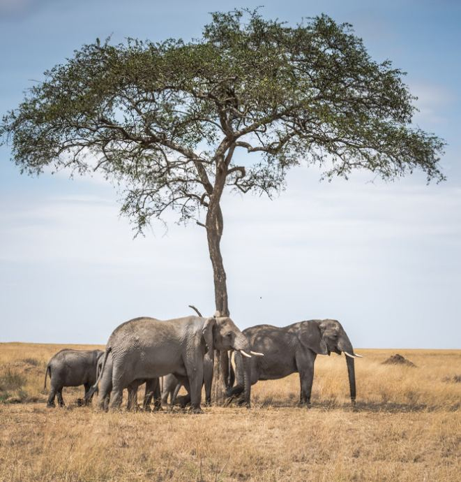 African Wildlife Photography