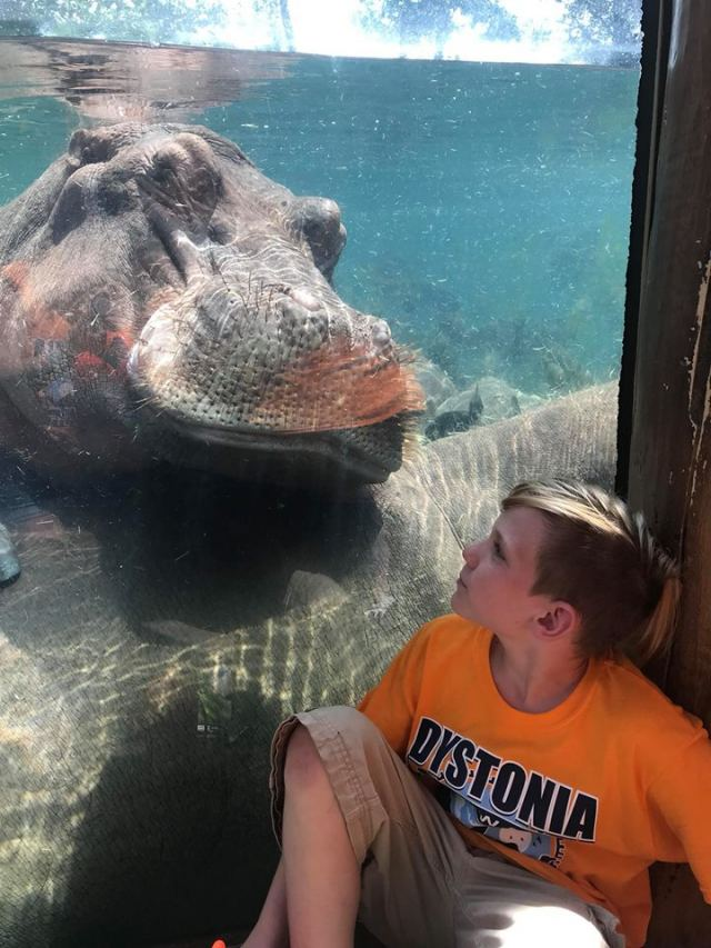 St. Louis is one of 13 cities hosting a Dystonia Zoo Walk.