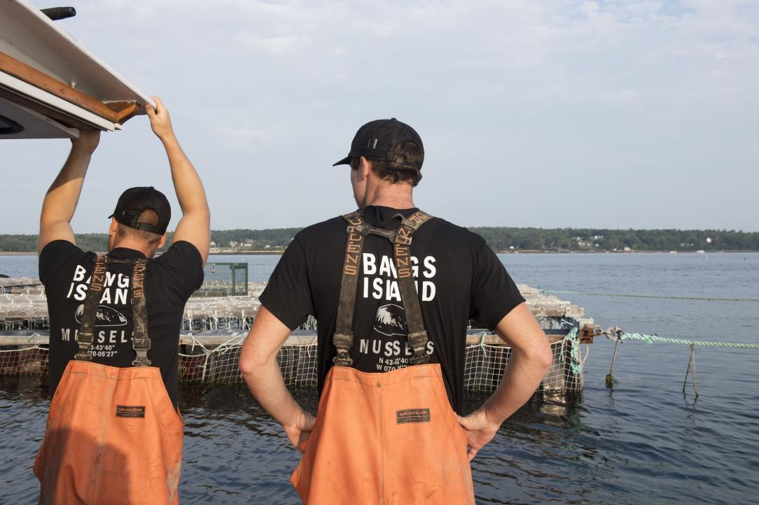 On the mussel rafts at Bangs Island, Casco Bay, Maine