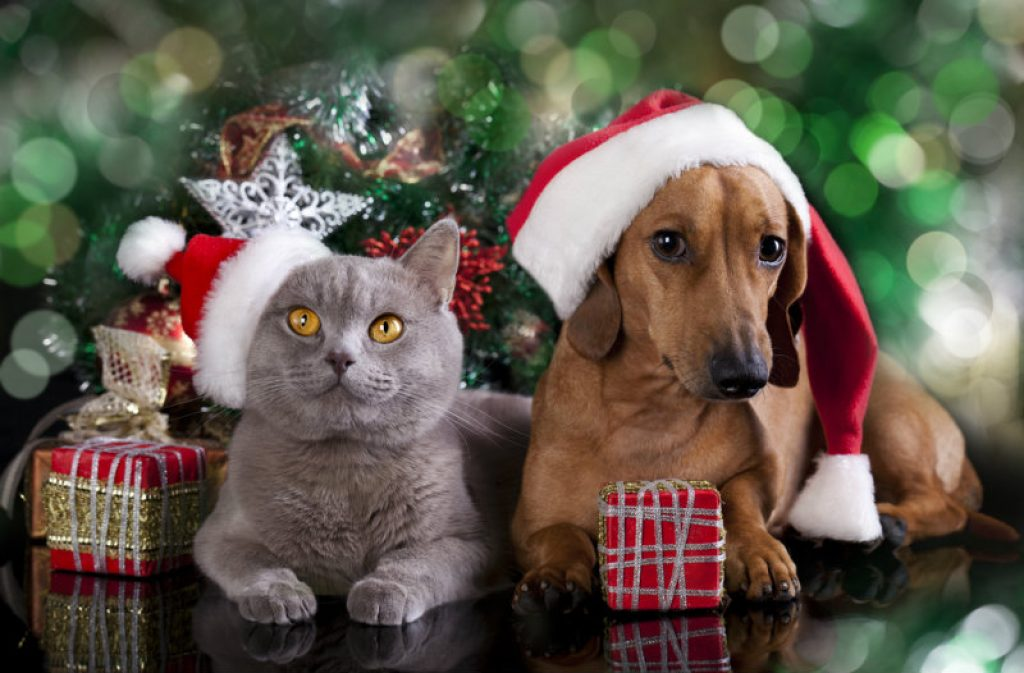 Help the Animals This Holiday Season