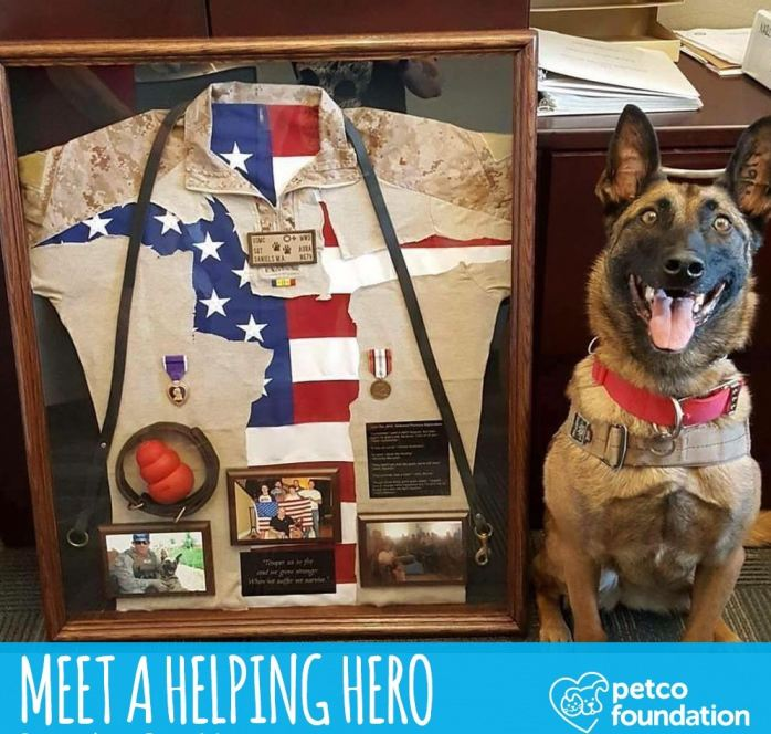Petco Foundation's annual Helping Heroes campaign made the MWDTSA grant possible