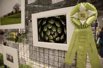 Chicago Flower & Garden Show Accepting Submissions For Annual Photo Competition