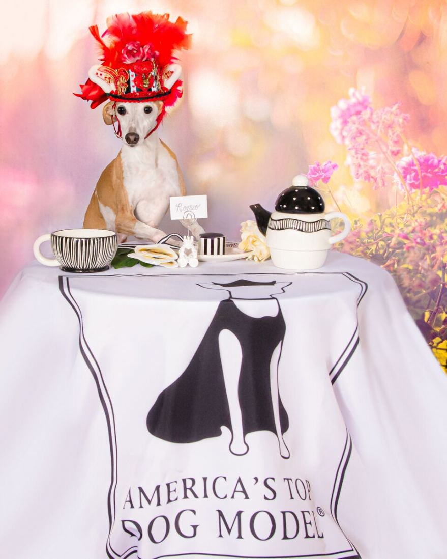 Romeo hosts a Mad Hatter's Tea Party