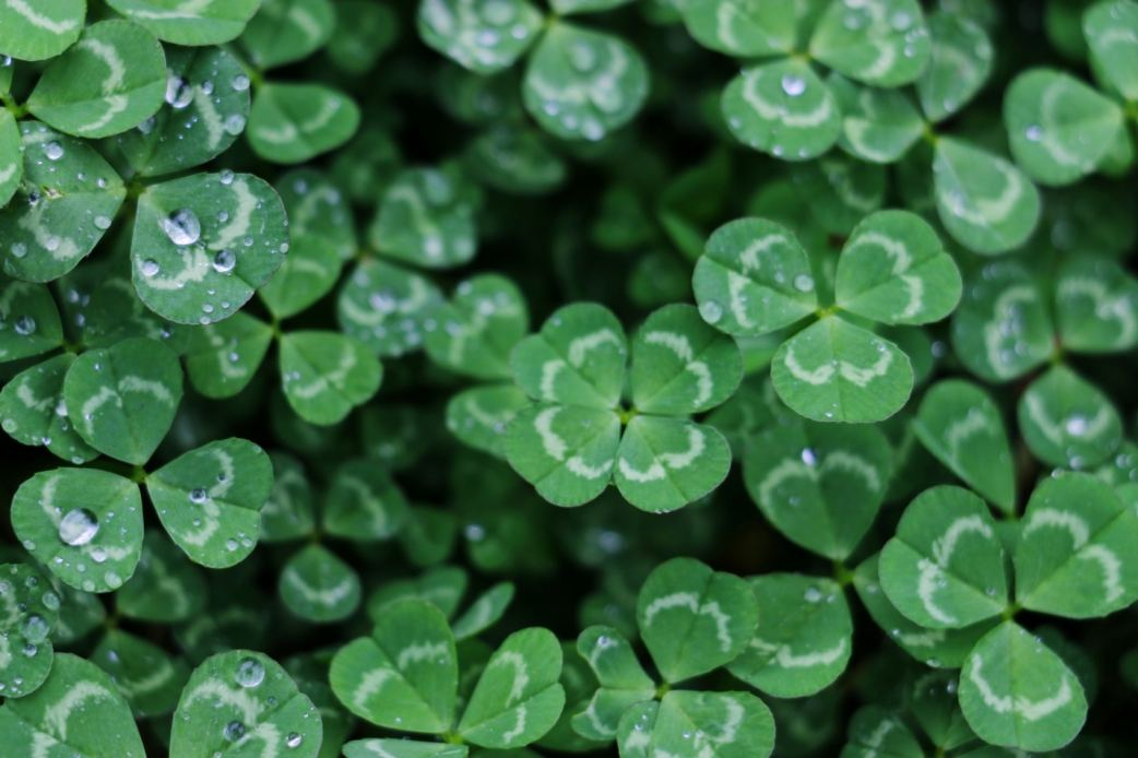 St Patricks Day Photo