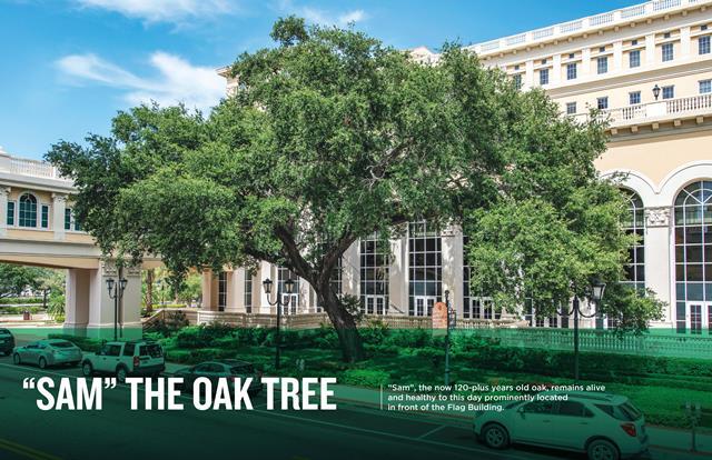 Sam The Oak Tree