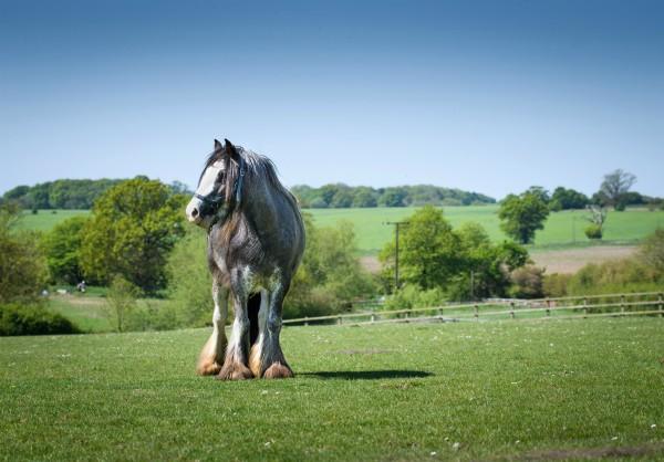 Bracken at Remus Horse Sanctuary