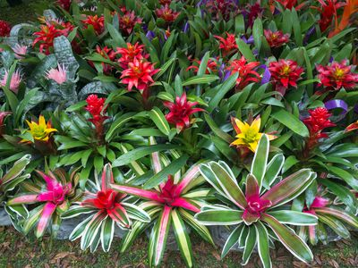 Mount Dora Plant Festival