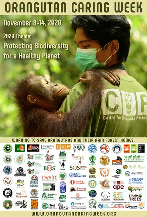 Orangutan Caring Week 2020 Poster