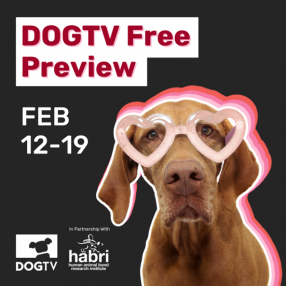 DOGTV Free Preview Pup With Heart Glasses