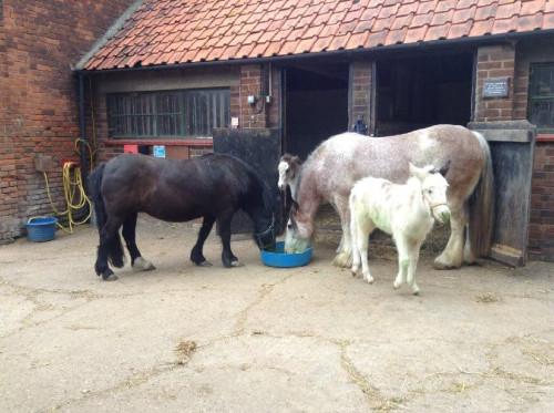 Grace, Bracken, Holly and Jess