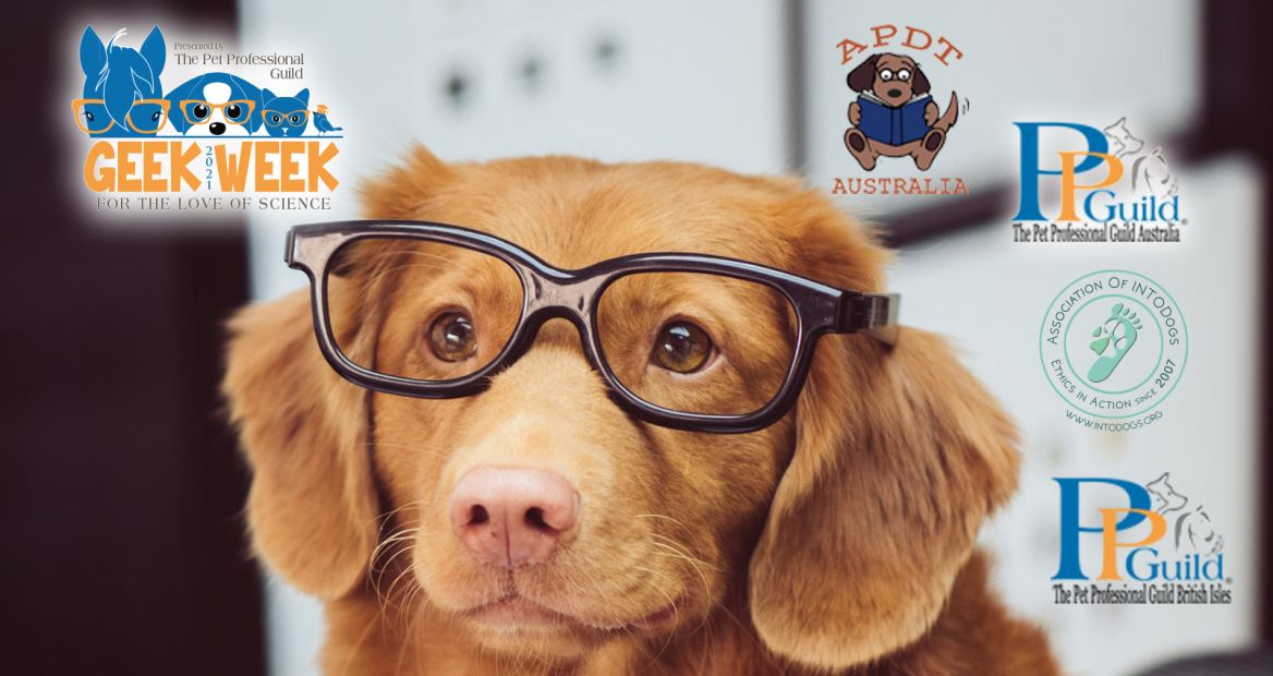Geek Week Hosts