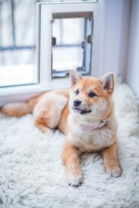 Window Dog Door