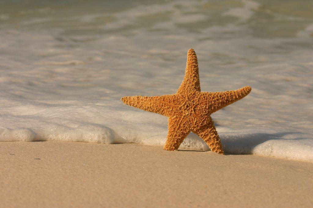 Beach dreamin'