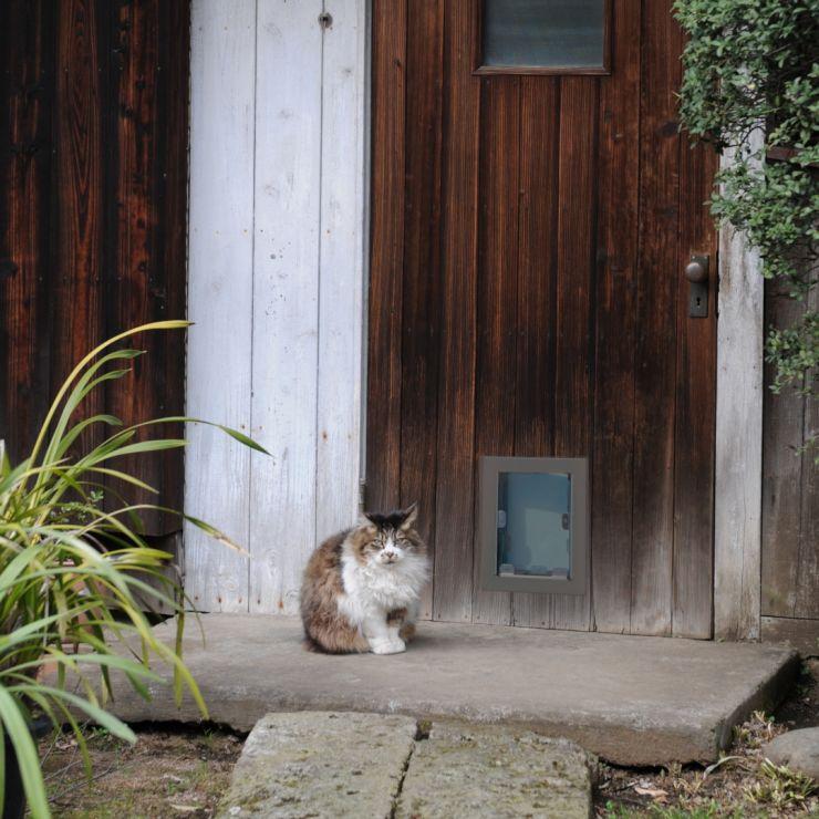 Cat Door Solutions