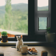 SB Standard Side Sliding Window for Cats and Dogs