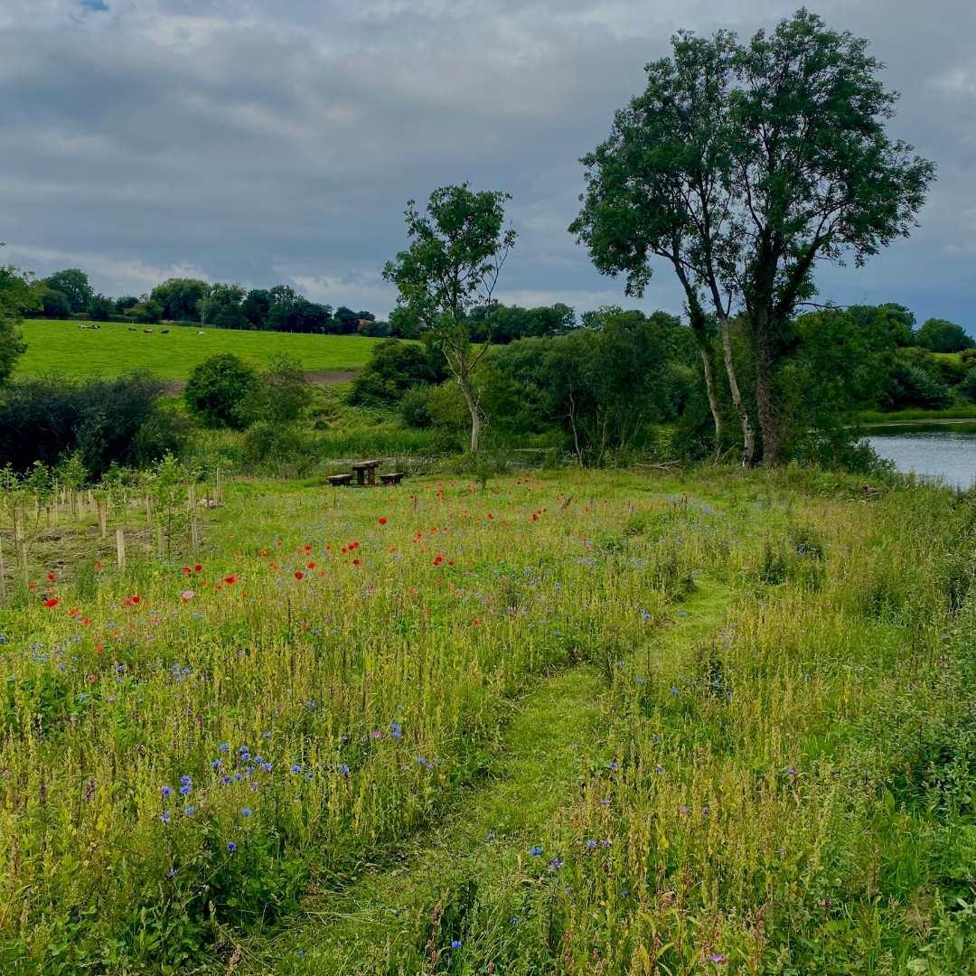 Irish Trees Site Images